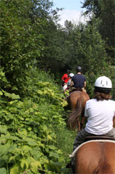 Horse riding in Wistler