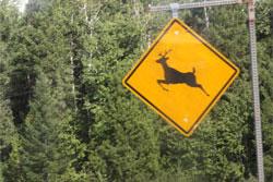 動物caution